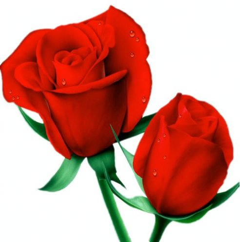 roses rouges.jpg, 30 KB